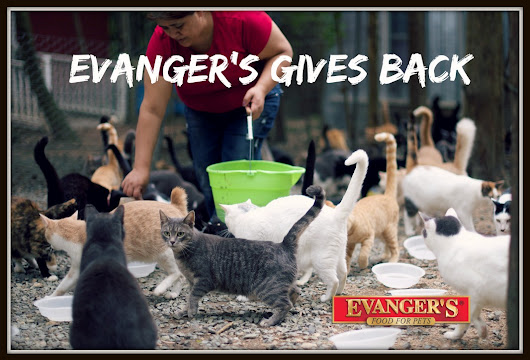 Evanger's Works with Goathouse Refuge to Give Back and Save Cats