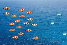Nadando a contracorriente