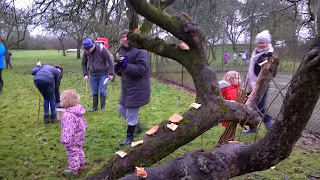 wassail in the orchards