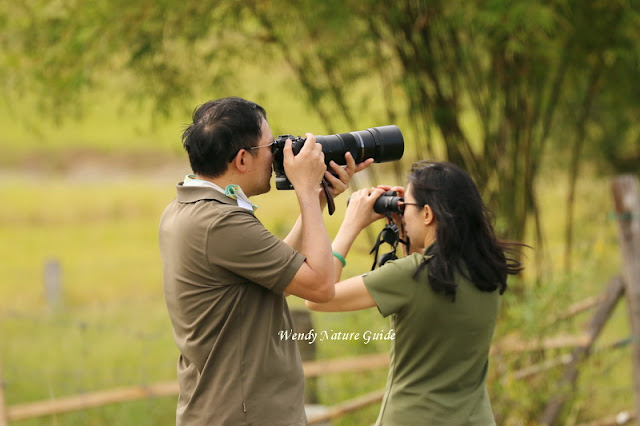 Langkawi Birdwatching tour