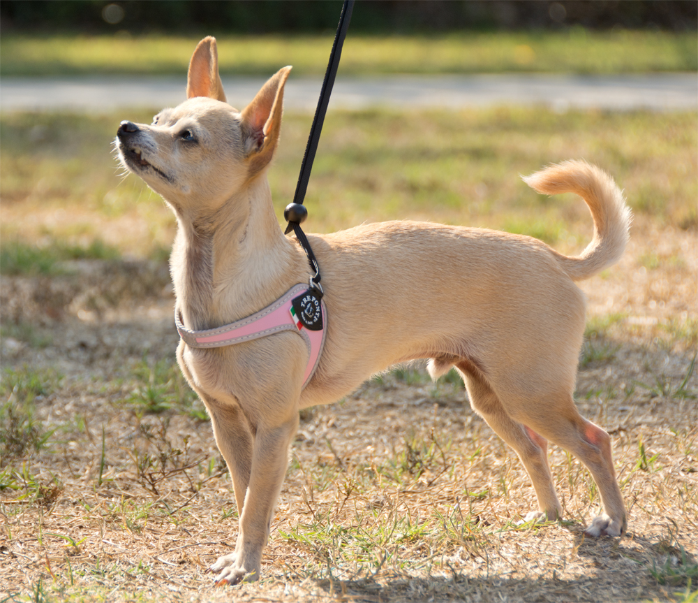 The Dog Geek: Product Review: Tre Ponti Liberty Harness
