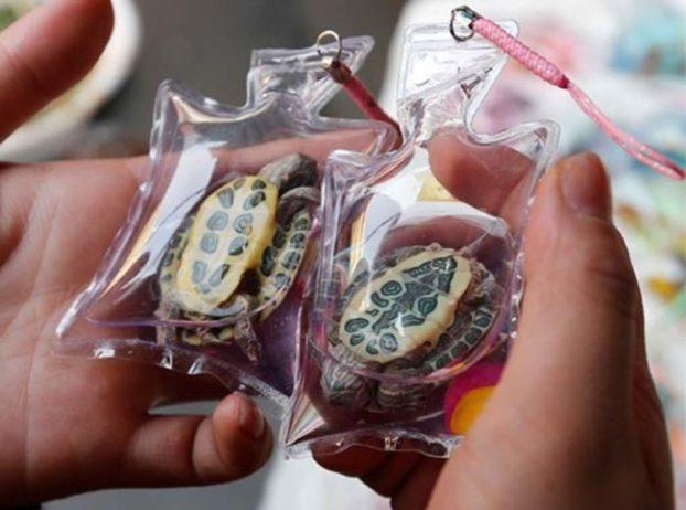 Petição   Animais vivos vendidos como porta-chaves na China