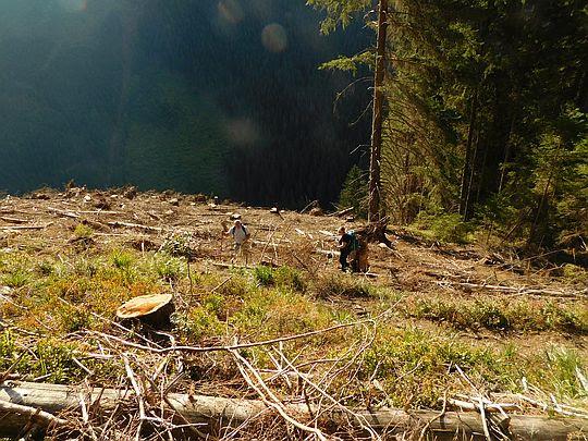 Zniszczony wichurami las na stoku.
