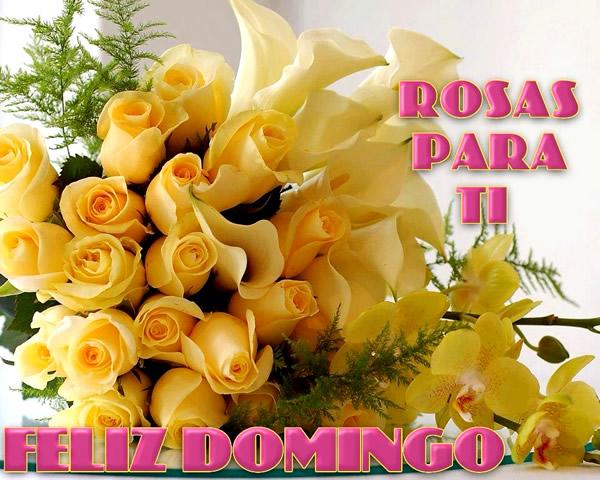 Rosas Feliz Domingo