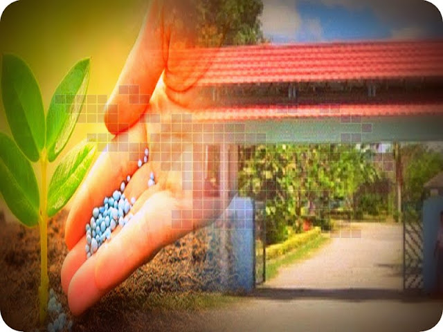 SMKN 4 Kota Jayapura Produksi Pupuk Kompos Campuran Rumput dan Sampah Plastik