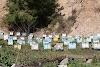 Οι Έλληνες μελισσοκόμοι που πέτυχαν και έγιναν πλούσιοι από τα μελίσσια τους...