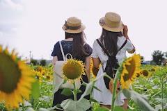 Nikmati Musim Panas di Ladang Bunga Matahari