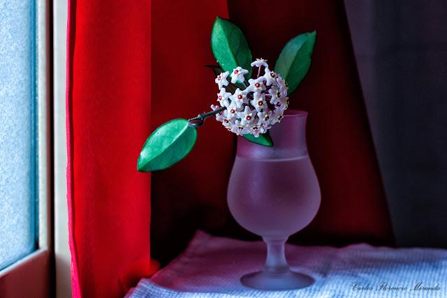 Bodegon. Copa con una flor junto a la ventana