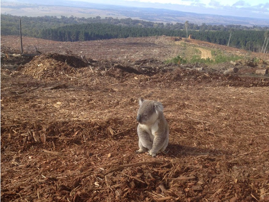 You Will Want To Recycle Everything After Seeing These Photos! - Homeless Koala
