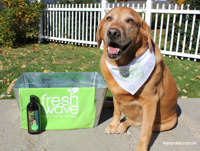 fresh wave odor removing dog shampoo gets the skunk smell out