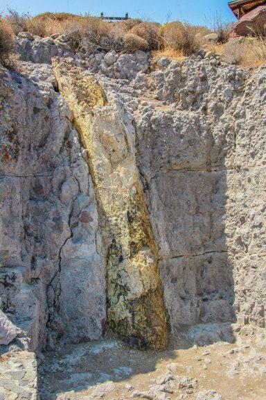 Περιήγηση στο Πάρκο Απολιθωμένου Δάσους Πλάκας Σιγρίου