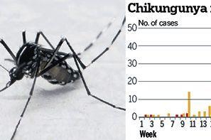 Epidemiologi Chikungunya
