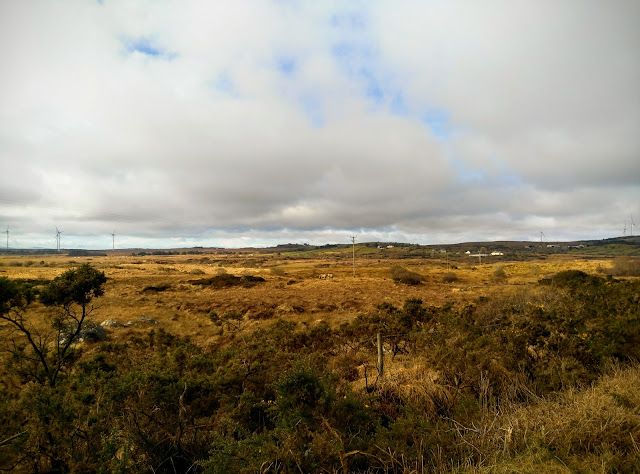 Connemara landscape, cows, bogs, village in distance