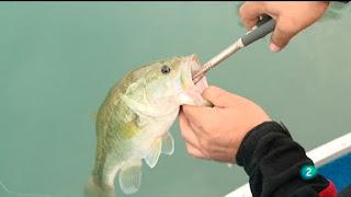 pesca jara y sedal