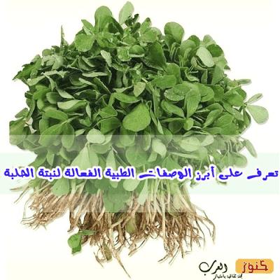 تعرف على أبرز الوصفات الطبية الفعالة لنبتة الحلبة