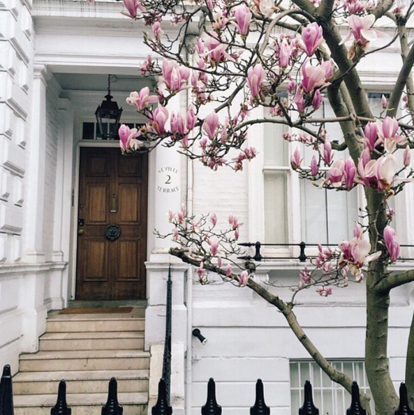 Magnolia - Freshly-bloomed blossoms by @ giuliaballetti, London {Cool Chic Style Fashion}