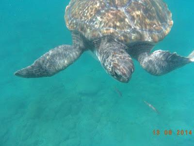 Schnorcheln in El Puertito – Suppenschildkröte