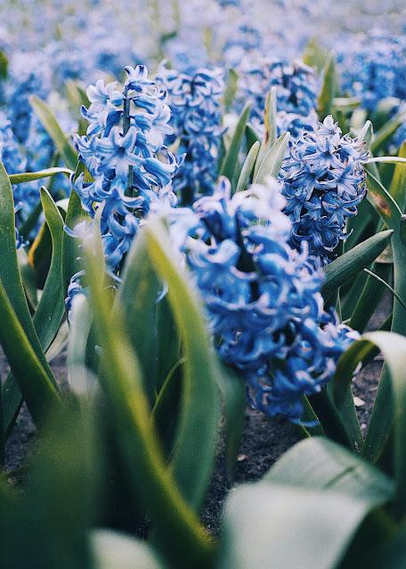 fleurs de La Torche