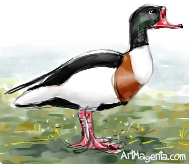 Shelduck is a bird sketch by ArtMagenta