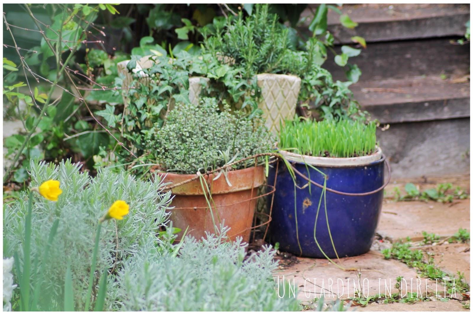 lavori di marzo in giardino: agapanti in vaso – un giardino in diretta