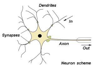 Struktur Neuron pada otak manusia