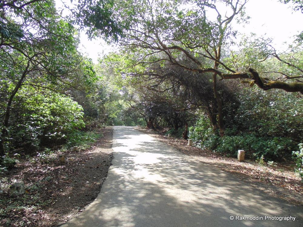 Bike ride from Pune-Kaas-Bamnoli-Mahabaleshwar-Pune
