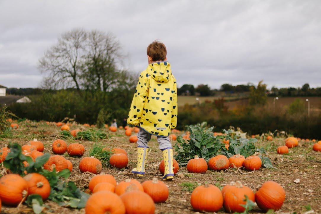 boy in pumpkin patch