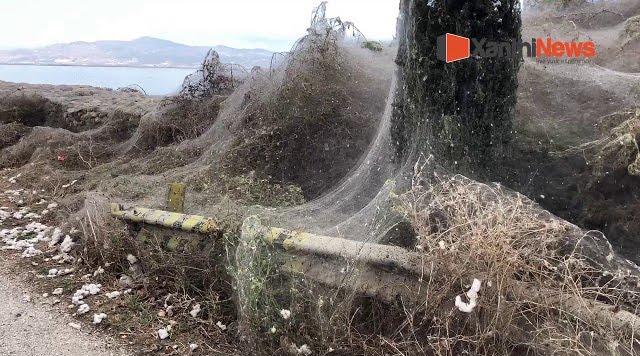 Απίστευτο: Πέπλο από ιστό αράχνης σκέπασε και τη λίμνη Βιστωνίδα