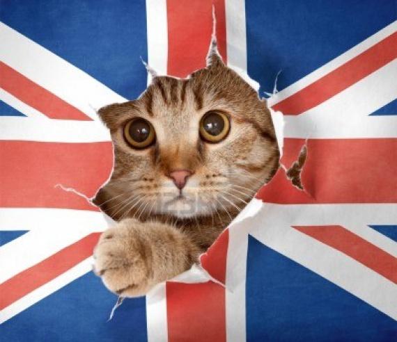 UK%2Bcat.jpg