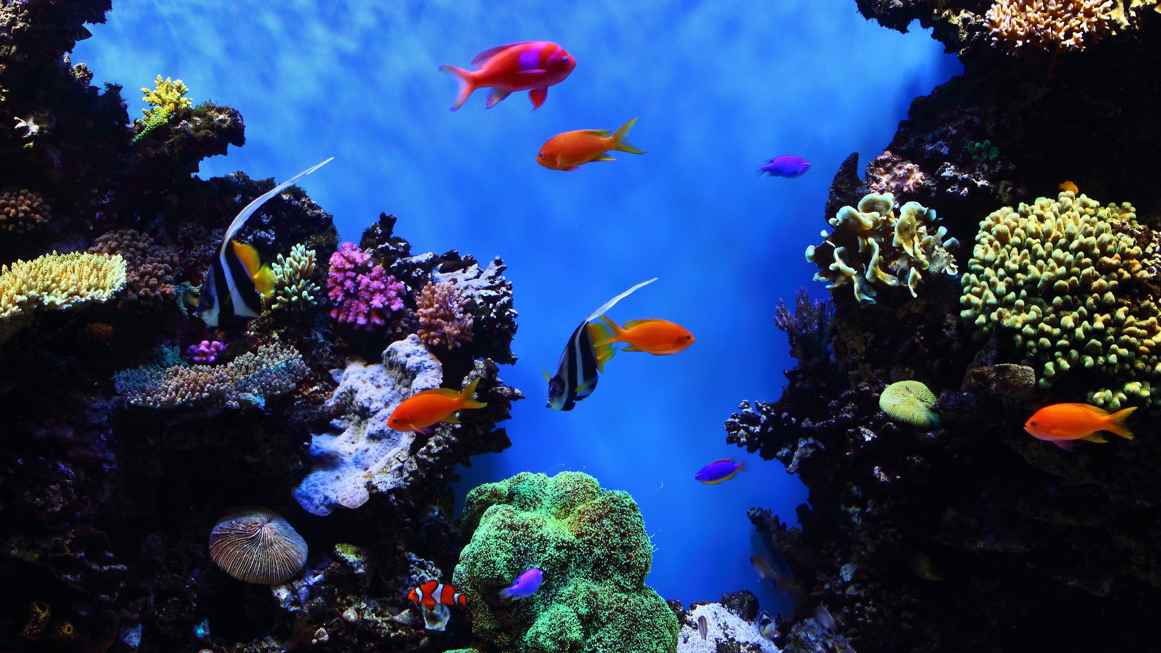 4K Aquarium Screensaver And TV Wallpaper