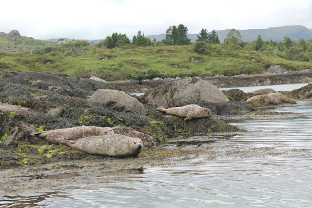 Seal Colony near Garnish Island