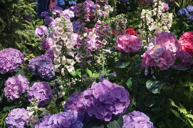 Floral Showcase