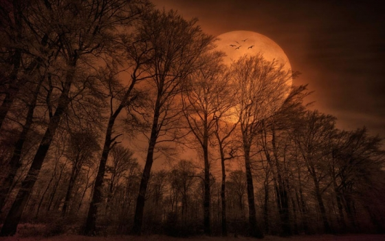 Dark Fall Wallpaper Wiccan Moonsong Harvest Moon