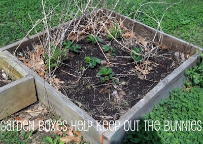 Garden boxes to keep bunnies out rabbits