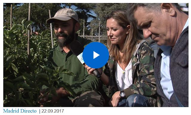 http://m.telemadrid.es/programas/madrid-directo/la-despensa-solidaria-de-la-quinta-de-torre-arias