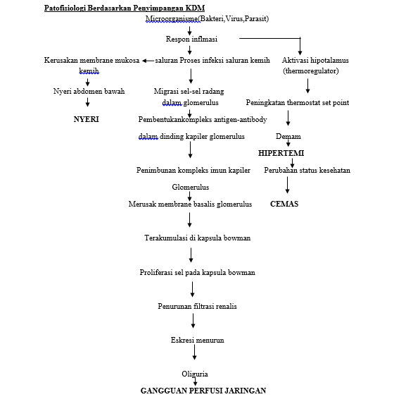 Patofisiologi Glomerulonefritis | Blog Kesehatan