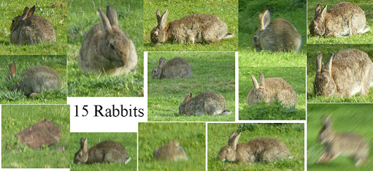 Fifteen rabbits and a rainbow.