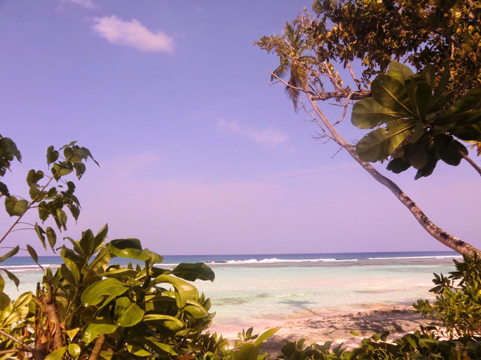 Palms-Seychelles