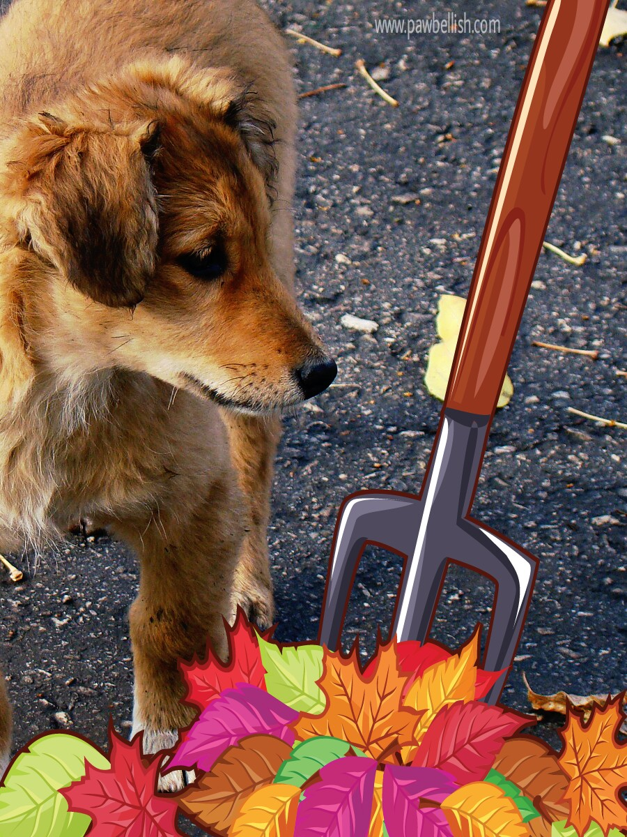 Puppy playing in the raked leaves | Twenty seven dog names that mean Autumn.