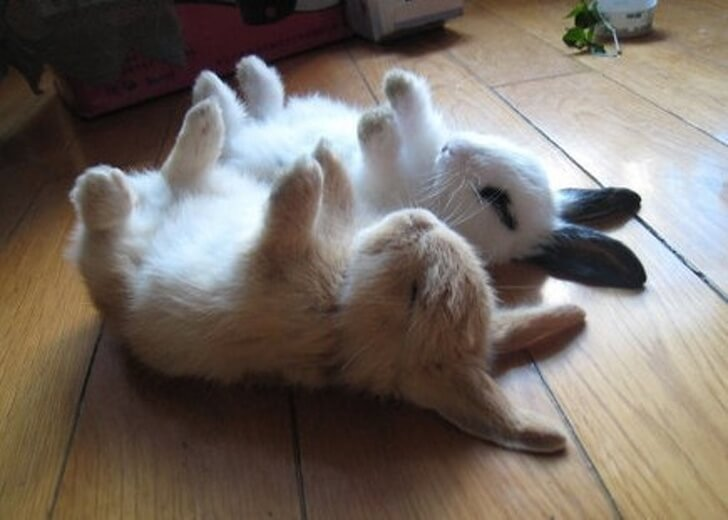 33 Cute Pictures Of Bunnies That Immediately Put Us In The Easter Spirit