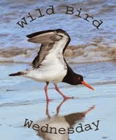 Wild Bird Wednesday