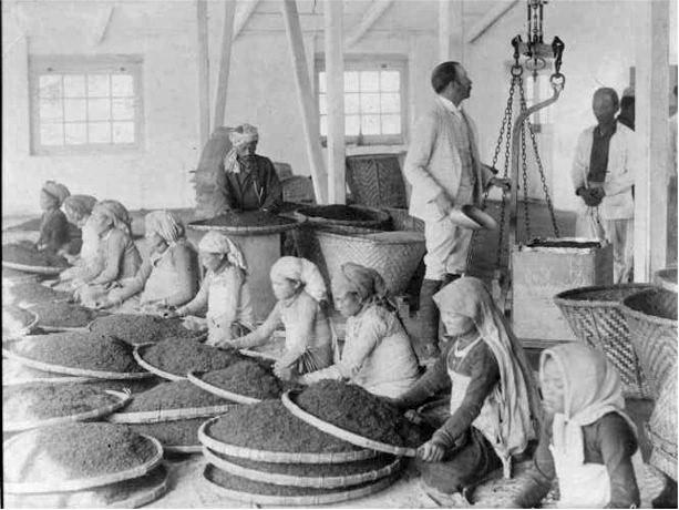 Women Workers Cleaning Tea Leaves in Factory in Darjeeling, India - 1865