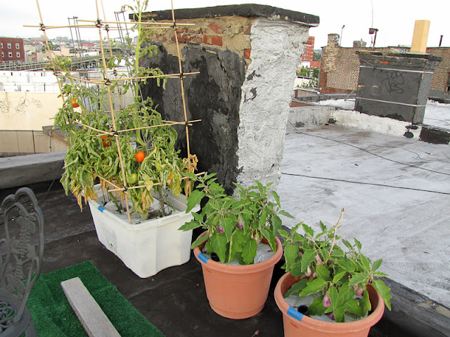 Bucolic Bushwick Rooftop Container Vegetable Garden 2011