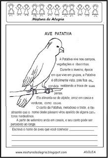 Texto sobre a ave patativa