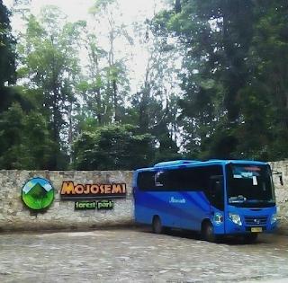 Sewa Bus Jogja Tujuan Wisata Mojosemi Forest Park