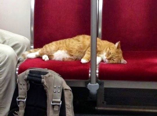 cat in subway