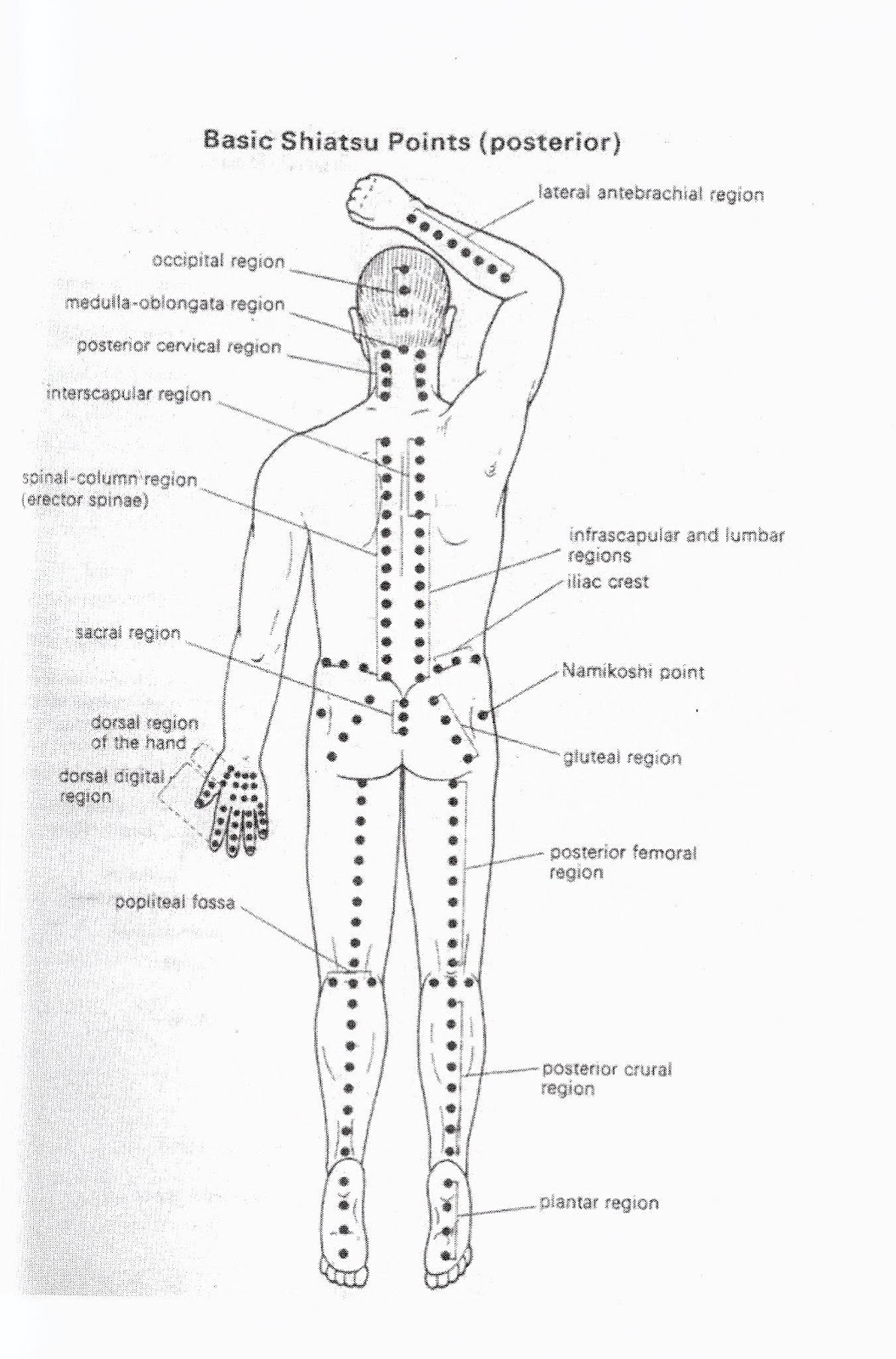 Osulima 5 Acupressure Therapy For Beauty And Health