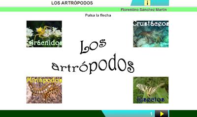 http://www.ceiploreto.es/sugerencias/cplosangeles.juntaextremadura.net/web/curso_3/naturales_3/artropodos/artropodos.html