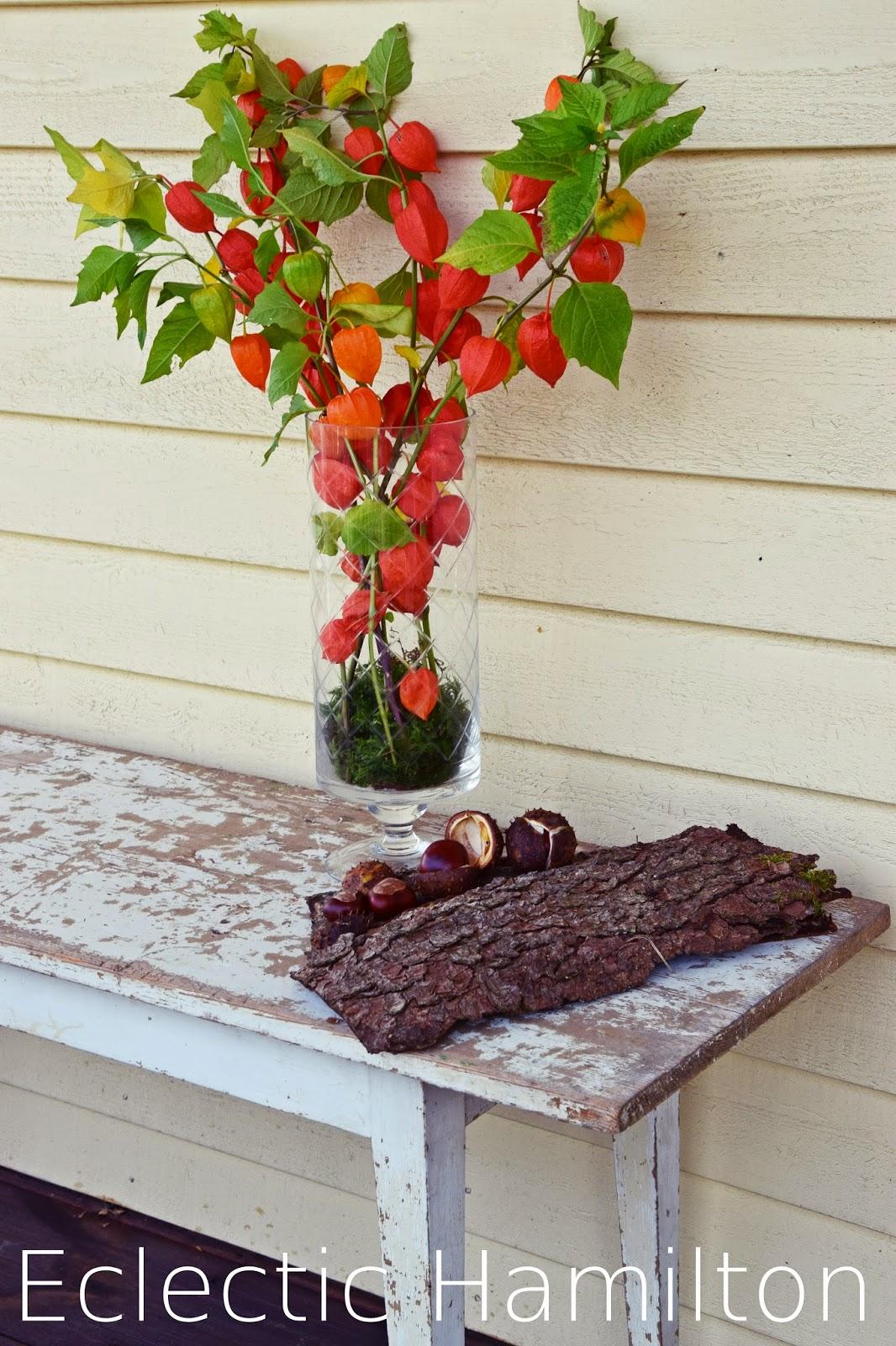 Deko für den Herbst mit Lampionblume und Kastanien sowie Moos. DIY Herbstdeko mit Naturmaterialien