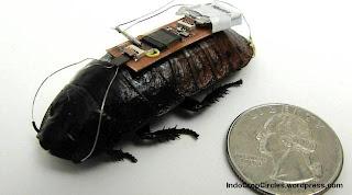Ternyata Kecoa Bisa Dijadikan Robot